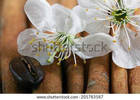 covenants cherry fragrance perfume - stock photo
