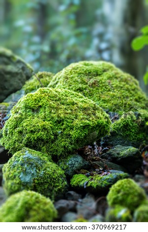 Covered rocks with moss  - stock photo