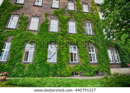 covered with ivy wall of house with window  - stock photo