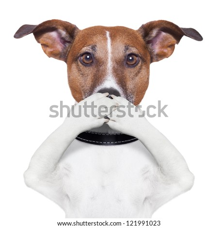 covering the mouth dog with paws - stock photo
