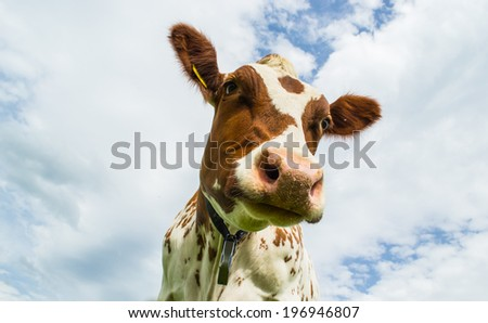 Cow against sky  - stock photo