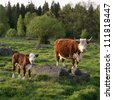 Cow and a calf standing in meadow - stock photo
