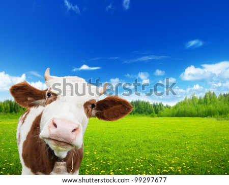 cow and field of fresh grass - stock photo