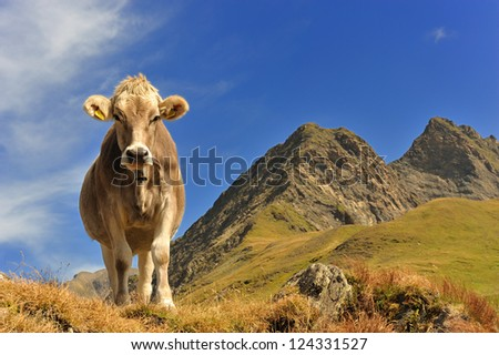 Cow at the feet of the mountains in Switzerland - stock photo
