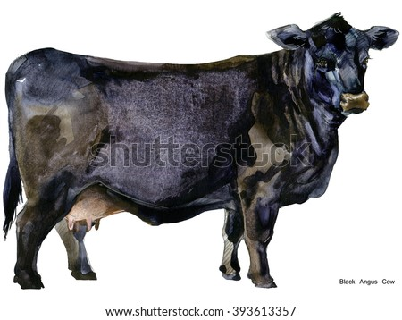 Cow. Cow watercolor illustration. Milking Cow Breed. Black Angus Cow Breed - stock photo