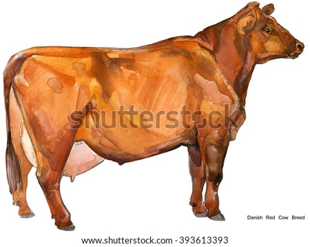 Cow. Cow watercolor illustration. Milking Cow Breed. Danish Red Cow Breed - stock photo