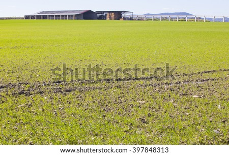 Cow farm building over cereal fields at Guadiana River Meadows, Badajoz, Spain - stock photo