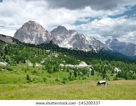 Cow grazing green grass on alpine meadow surrounded by high rocky mountains - stock photo