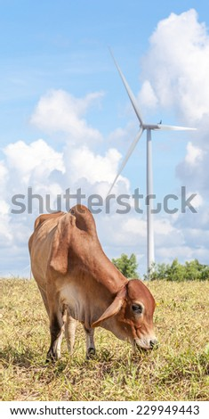 Cow grazing on meadow near the big windmill in wind farm electricity plant, Korat province in Thailand. - stock photo