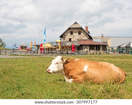 Cow in front of farmhouse in the Alps - stock photo