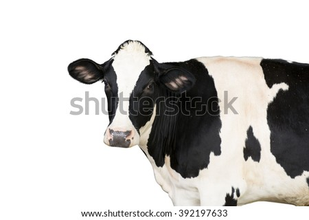 cow isolated on a white background - stock photo