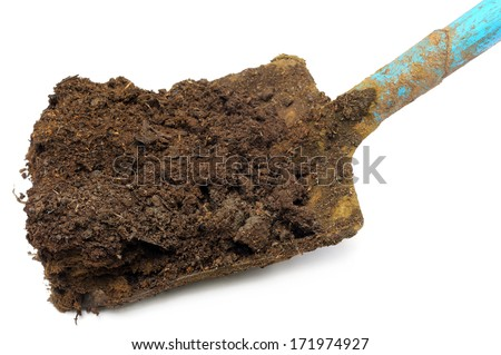 Cow manure on a shovel over white background - stock photo