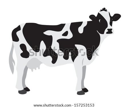 Cow on a white background - stock photo