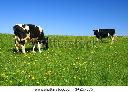 cow on green field - stock photo