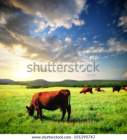 Cow on green meadow. Nature composition. real - stock photo