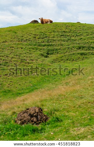 Cow resting on Top of a Hill in the Kronberg Meadows in the Swiss Alps. Alpstein Mountain Range. Canton of Appenzell Innerrhoden, Switzerland. - stock photo