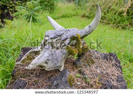 Cow Skull on a Rock - stock photo