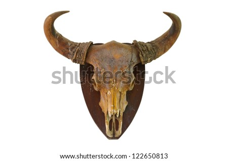 Cow skull on white wall - stock photo