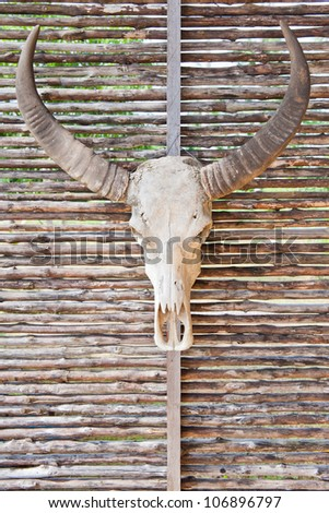 Cow skull with horns - stock photo