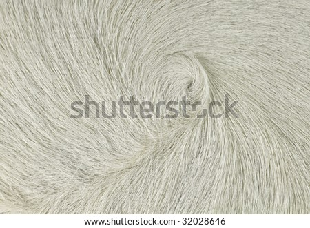 Cow Swirl White - stock photo