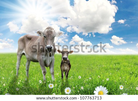 Cow with a calf on a beautiful meadow - stock photo