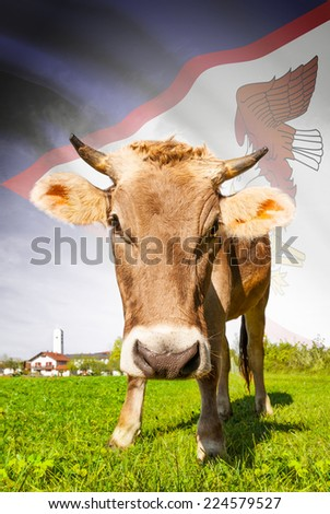 Cow with flag on background series - American Samoa - stock photo