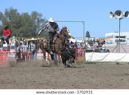 Cowboy Lassos Calf - stock photo