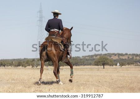 Cowboy on horseback. Horse ride. Equestrian sport. Sports riding. - stock photo