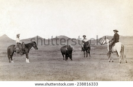 Cowboys, roping a buffalo on the plains, June 24, 1910 - stock photo