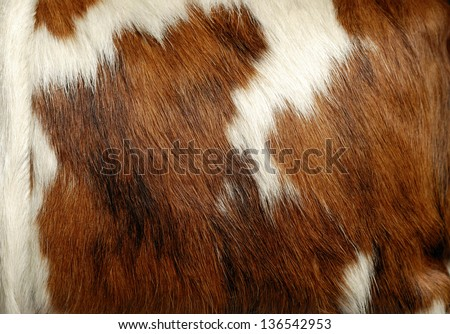 Cowhide Stock Photos Images Amp Pictures Shutterstock