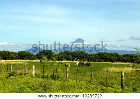 Cows an volcano - stock photo