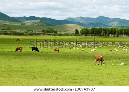 cows and sheep in Inner Mongolia - stock photo