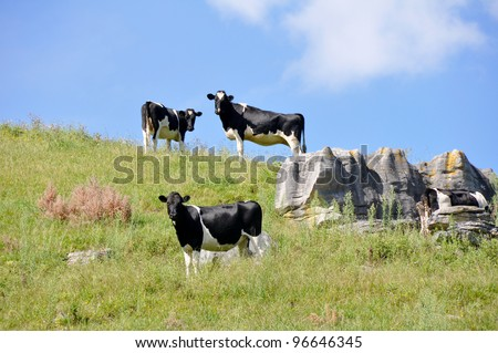 Cows at top of the hill - stock photo
