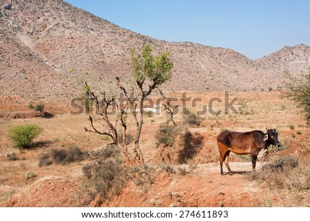 Cows graze in the wild on a background of mountains and rare trees - stock photo