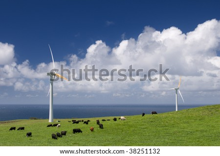 Cows grazing in green meadow among wind turbines on the ocean shore, alternative energy, electricity generation - stock photo
