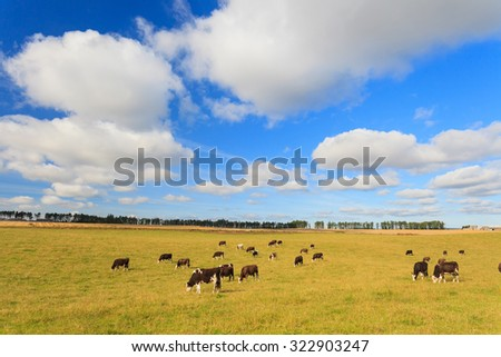 Cows grazing on a green lush meadow in Aberdeenshire, Scotland UK - stock photo