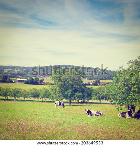 Cows Grazing on Alpine Meadows in France, Instagram Effect - stock photo