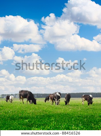 Cows grazing on meadow under blue cloudy sky - stock photo