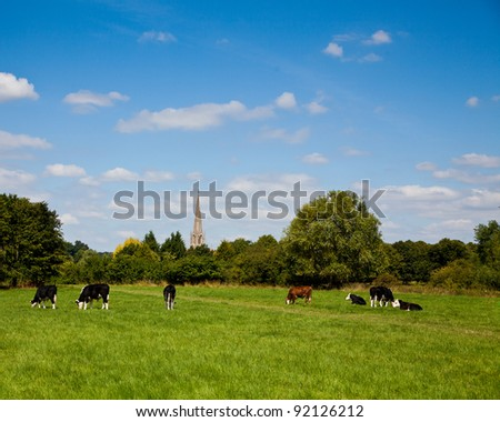 Cows in an English meadow in summer - stock photo