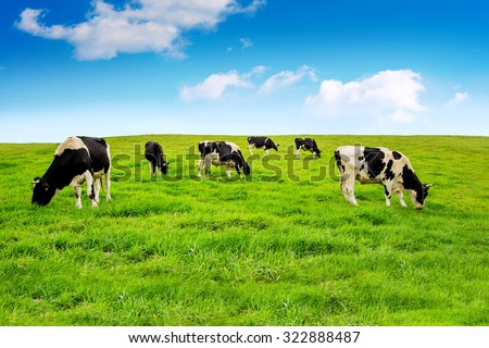 Cows on a green field. - stock photo