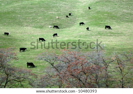 Cows on a steep hill - stock photo