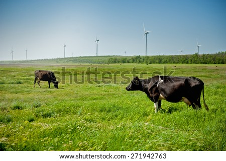 Cows on the field with wind turbines in the background - stock photo