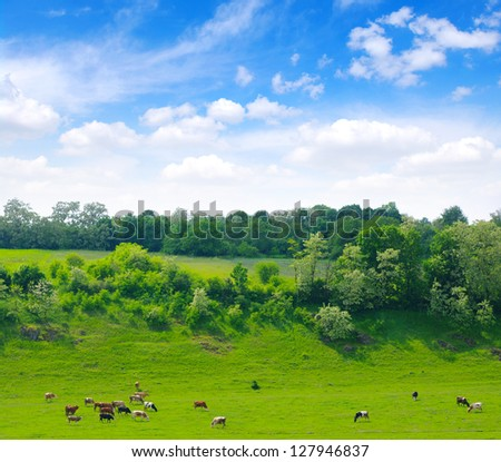Cows on the green meadow - stock photo