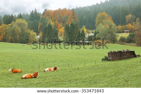 Cows on the green meadow by the autumn forest in Bavarian countryside ~ Beautiful fall landscape of an alpine ranch in Ramsau Bavaria, Germany  - stock photo