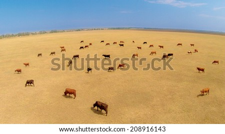 cows paseshchy on a pasture - stock photo
