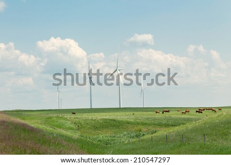 cows peacefully grazing in rolling hills of green grass with wind turbines slowly turning under a pale blue sky in the summer time - stock photo