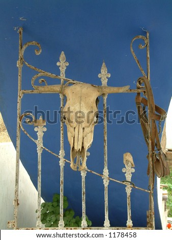 Cows skull on fence - stock photo