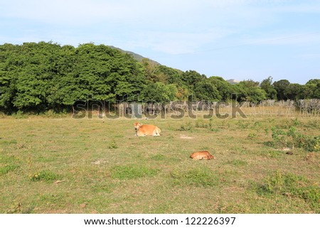 cows with blue skys and trees background in hong kong with good weather in geo park - stock photo