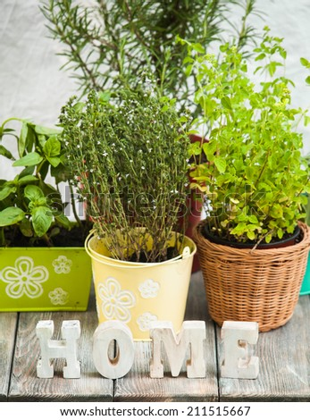 Cozy home garden with herbs - rosemary, sage, basil, thyme and oregano - stock photo