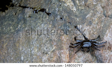 crab and crude oil spill on the stone at the beach, focus on crab - stock photo